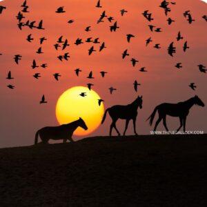 ANIMAL LAW IN INDA